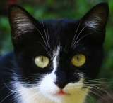 black and white cat ID-10029960