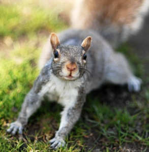 Squirrel by cherie