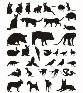 All animals illustration ID-10040124