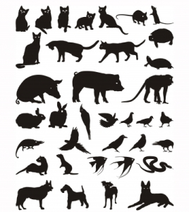 All animals illustration ID-10040124