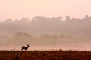 Running Deer at dusk ID-100193272