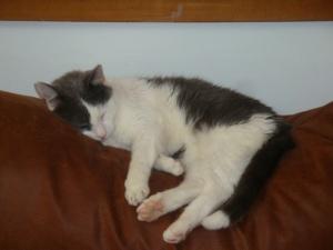 kitty DSC01014