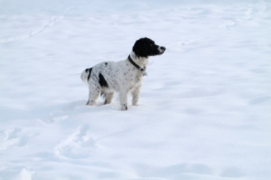 Dog in snow ID-100144221