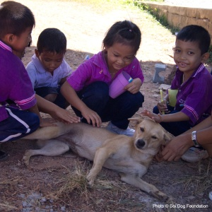 children and thailand dog