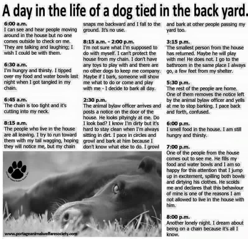 A Day in the Life of a Dog Tied in the Backyard | Untold